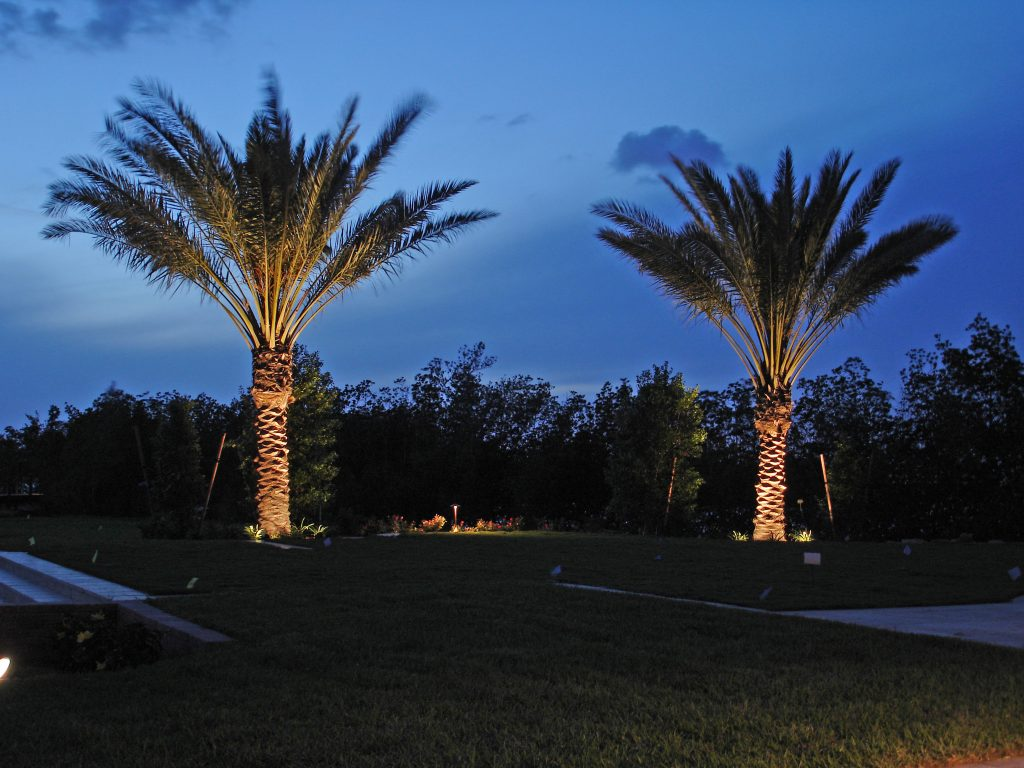 Bring Your Charleston Palm Trees To Life At Night With Properly