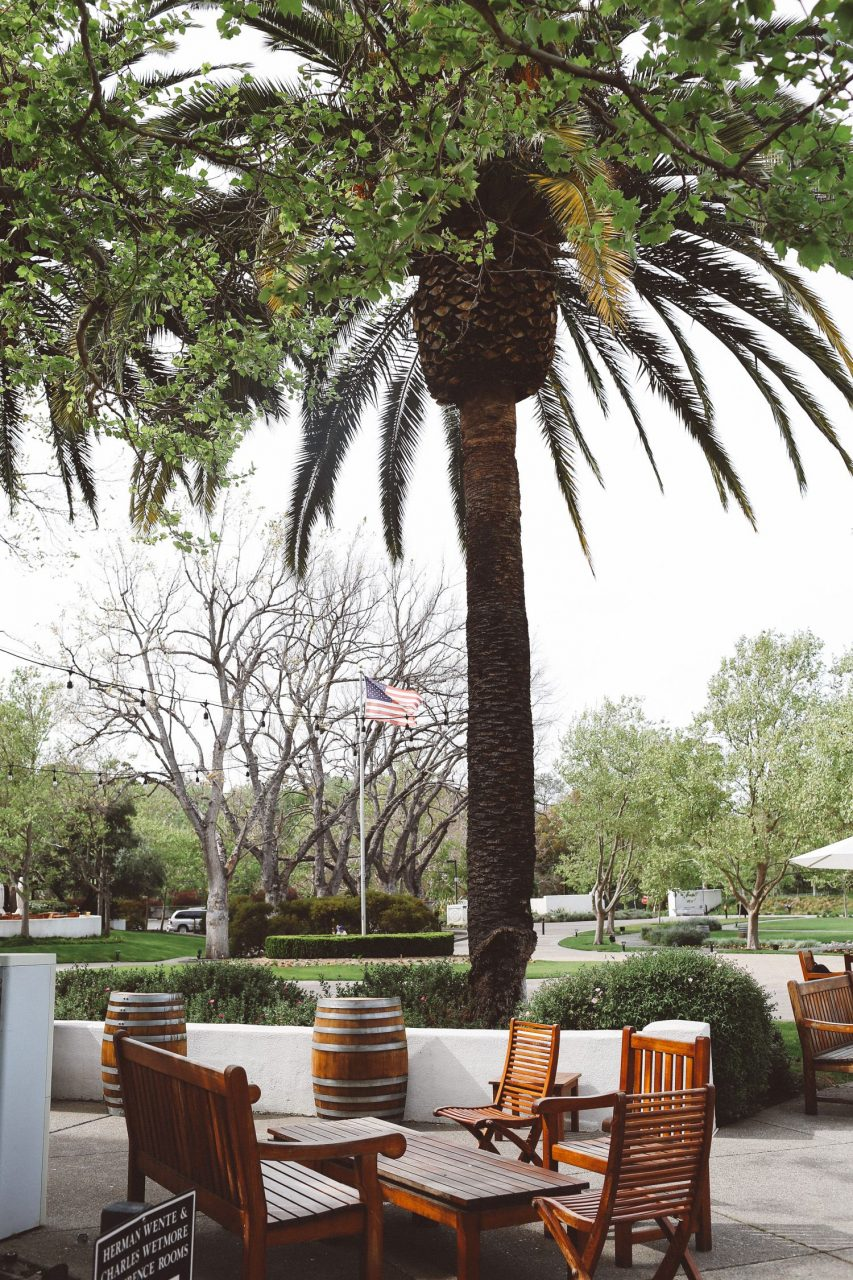 Outdoor Patio Furniture Under A Palm Tree The Best Wine Tasting In