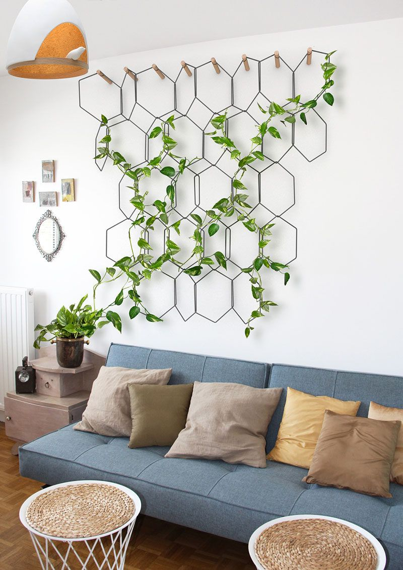 6 Ways To Include Indoor Vines In Your Interior Indoor Gardening