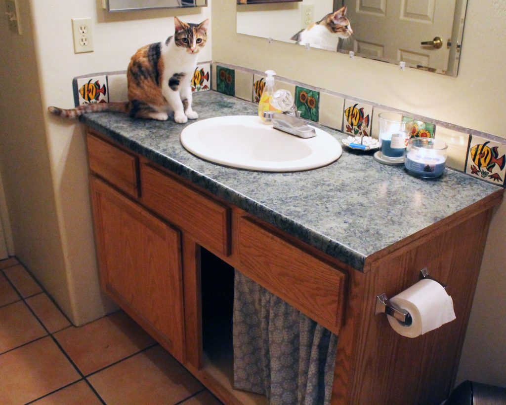 Cute Easy Way To Hide Your Litter Box