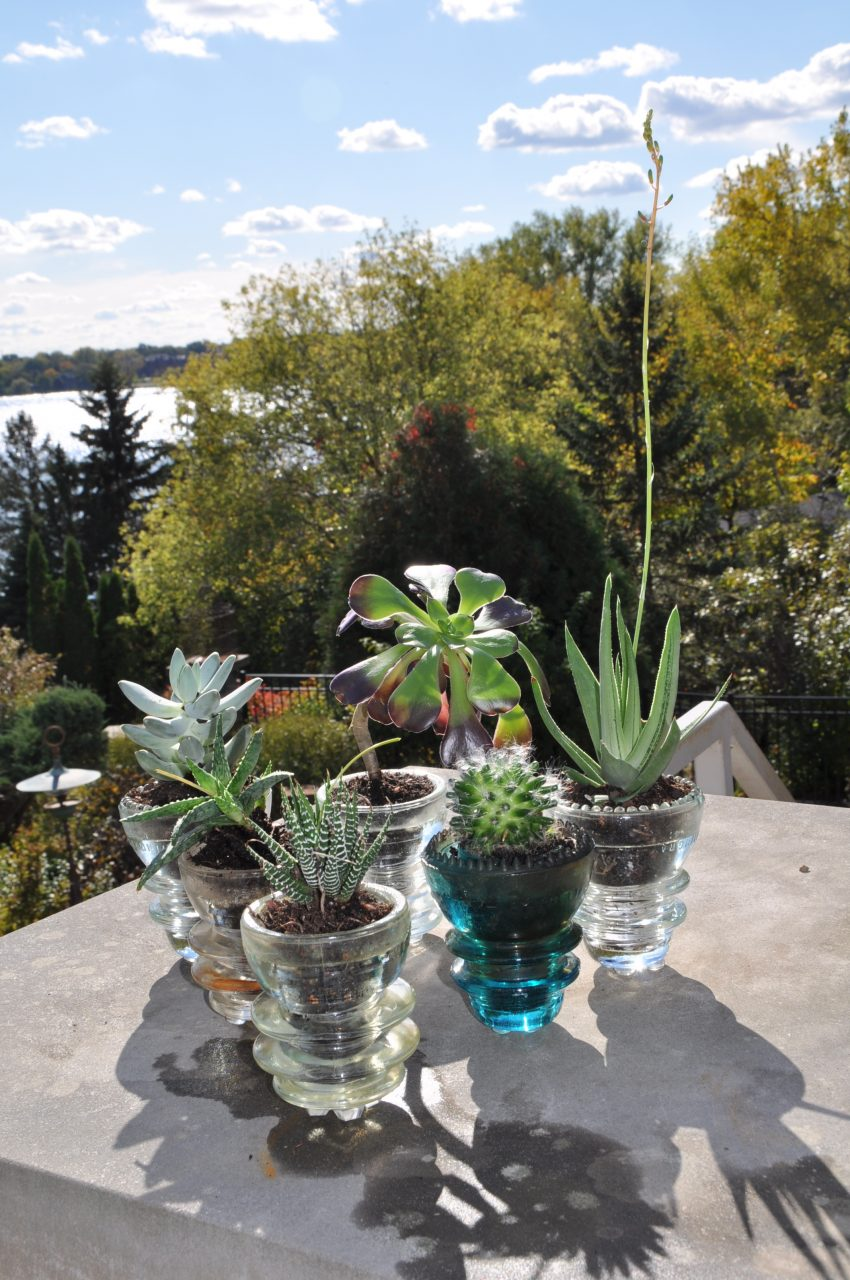 Diy Reuse Glass Insulators For Succulent Planters Dan330