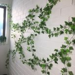 Ivy Wall On Bricks Indoor Ivy Wall Greenwall Cars And Mads In