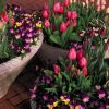 Spring Flower Outdoor Decor