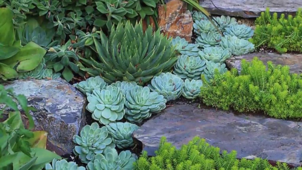 10 Attractive Outdoor Succulent Garden Ideas Youtube