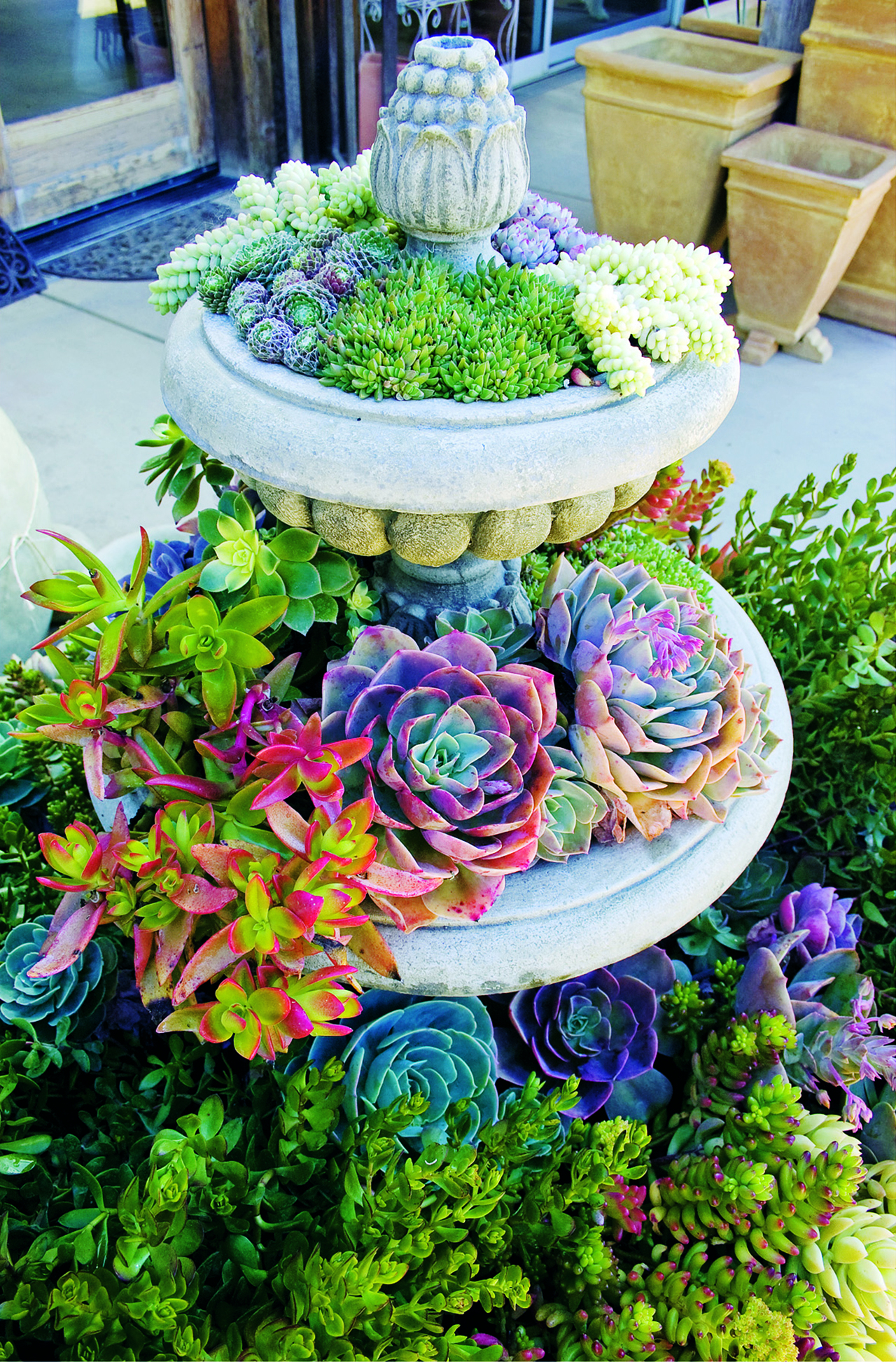 50 Best Succulent Garden Ideas For 2019