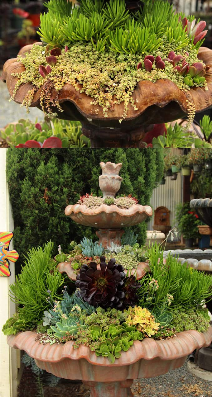How To Plant Beautiful Succulent Gardens In 5 Easy Steps A Piece