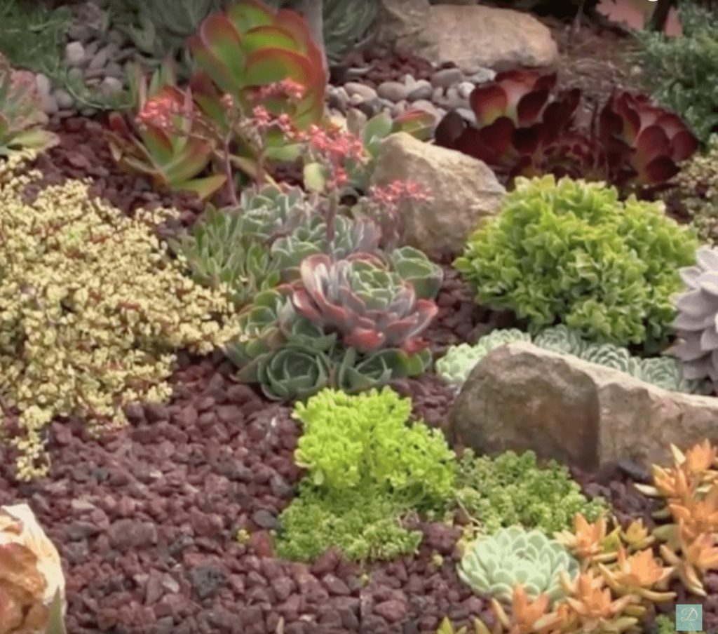 Laura Eubanks Top Ten Tips For Succulent Garden Design Debra Lee