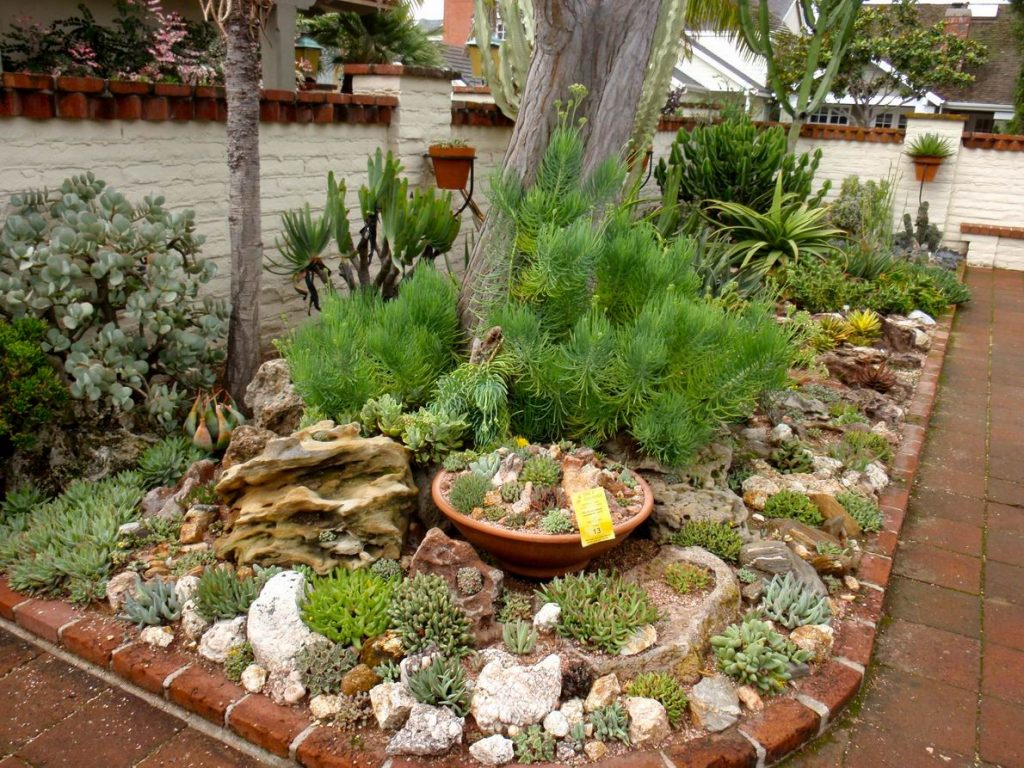 Succulent Garden Ideas Design Outdoor Ideas Choosing Succulent