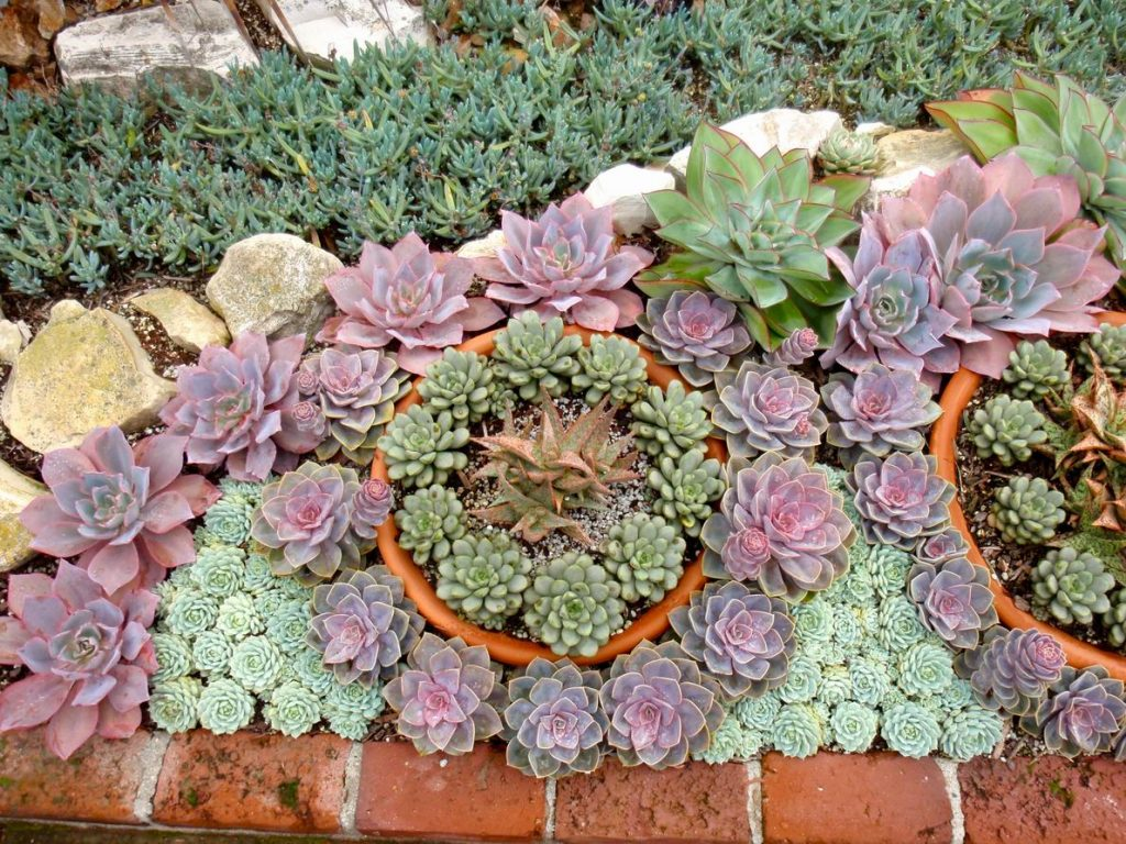 The Best Succulent Garden Design Outdoor Ideas