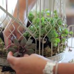 25 Diy Succulent Garden Ideas And Tutorials