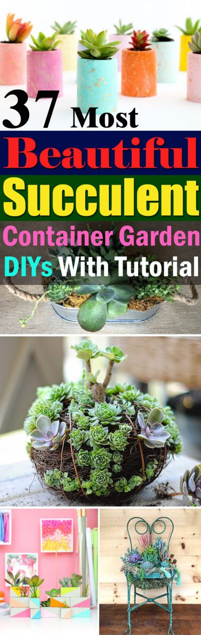 37 Most Beautiful Succulent Container Garden Diys With Tutorials