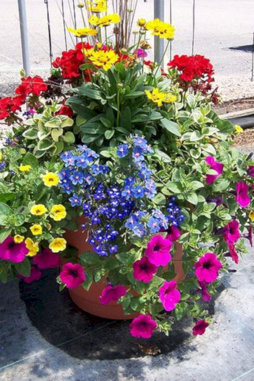 Beautiful 5 Summer Color Container Planting Ideas For Your Front