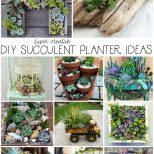 Diy Succulent Planter Ideas The Happy Housie