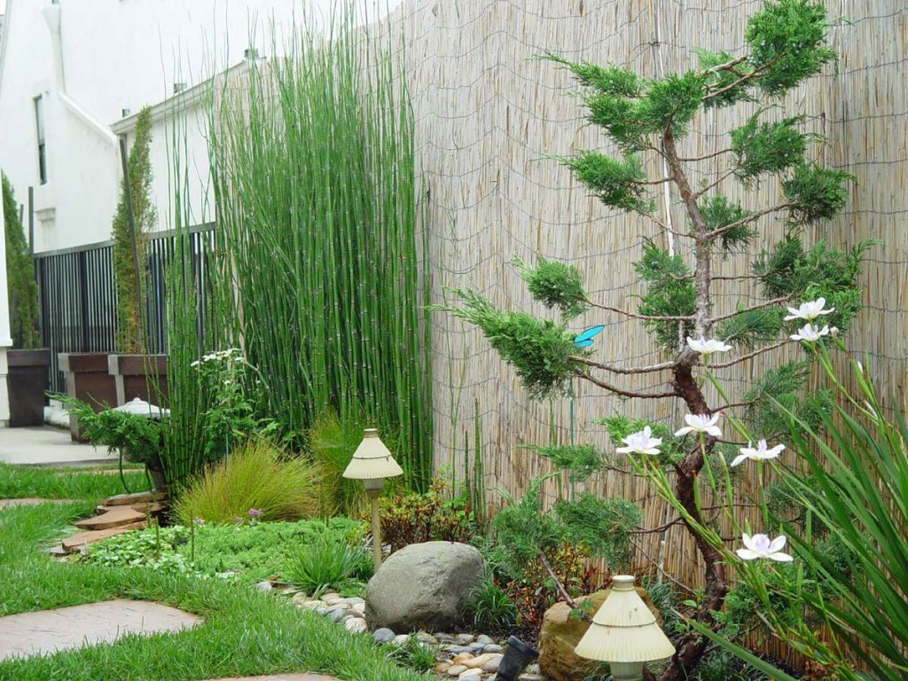 Backyard Beautiful Asian Backyard Garden Design With Pine Bonsai