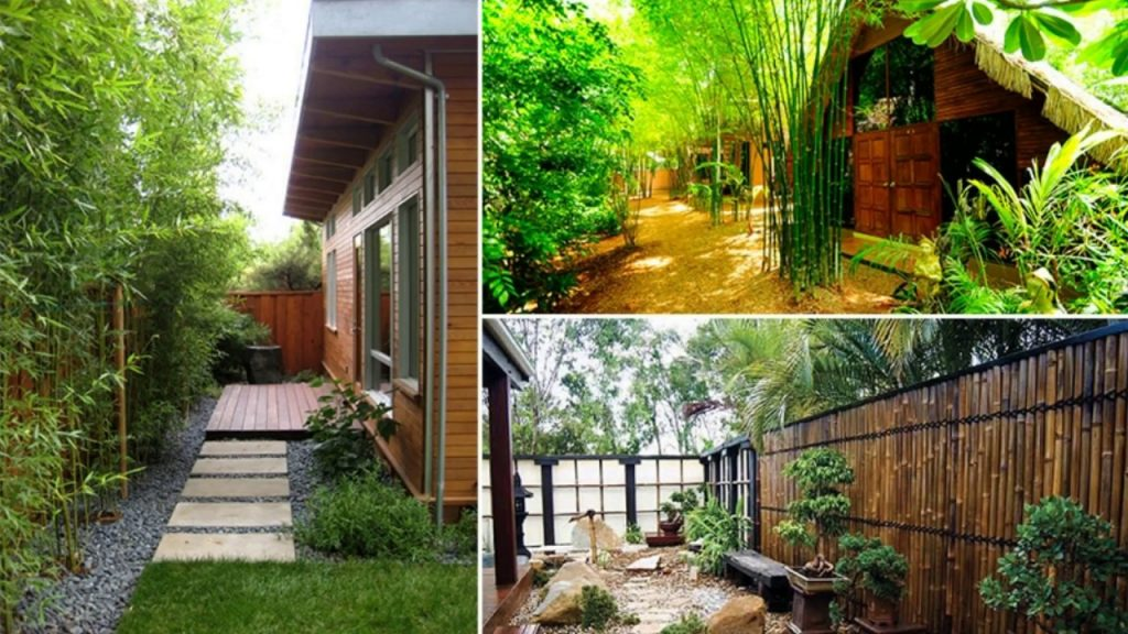 Bamboo Ideas For Backyard Youtube