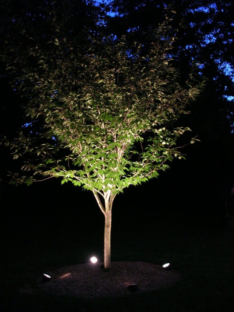 Tree Uplighting Ideas Lighting Design Ideas Landscape Lighting