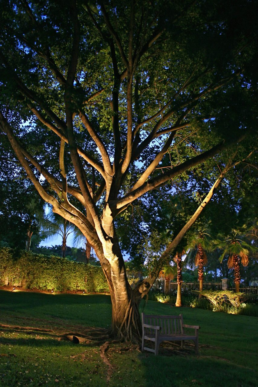 Uplighting Large Trees Outside Outdoor Tree Lighting Landscape