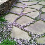 Ground Cover Grows In Between The Stones Plants Garden Paths