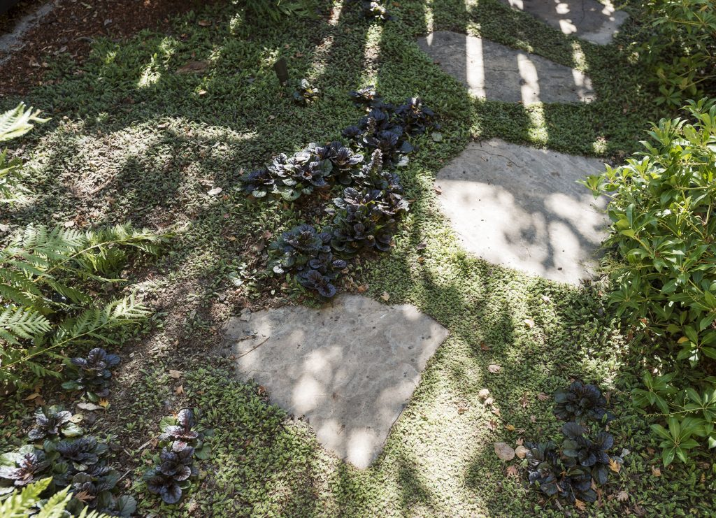 Hardscaping 101 Ground Covers To Plant Between Pavers Gardenista