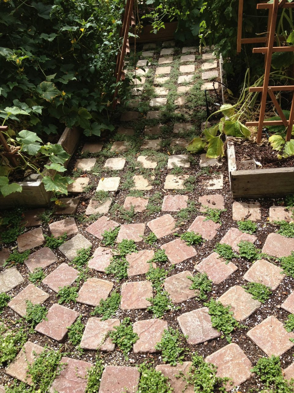 Planting Blue Star Creeper And Wooly Thyme Between Pavers