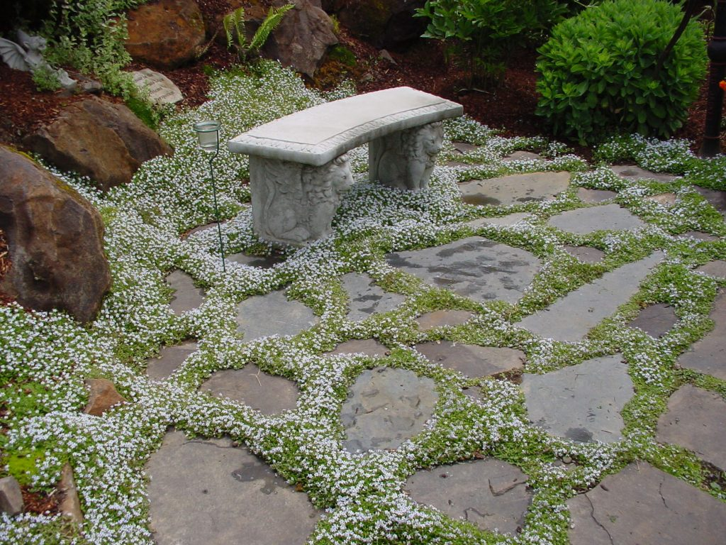 The Best Sprawling Plants For Paved Areas And Walkways