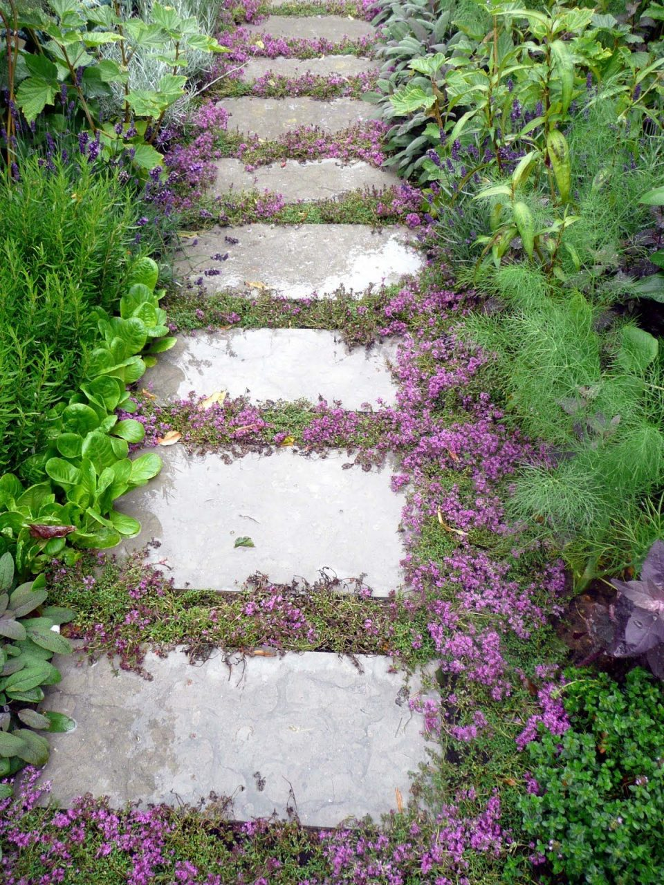 Top 10 Plants And Ground Cover For Your Paths And Walkways Pergola